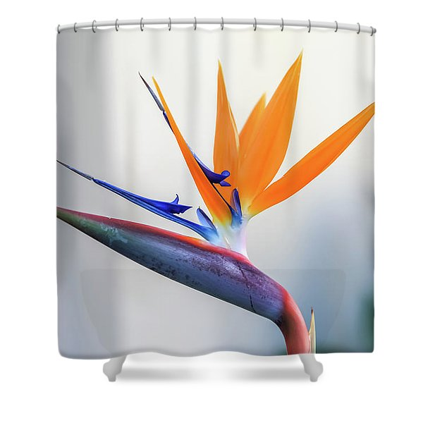 Beauty In Paradise Shower Curtain