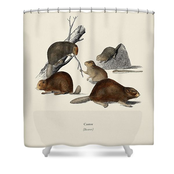 Beaver  Castor  Illustrated By Charles Dessalines D' Orbigny  1806-1876  Shower Curtain
