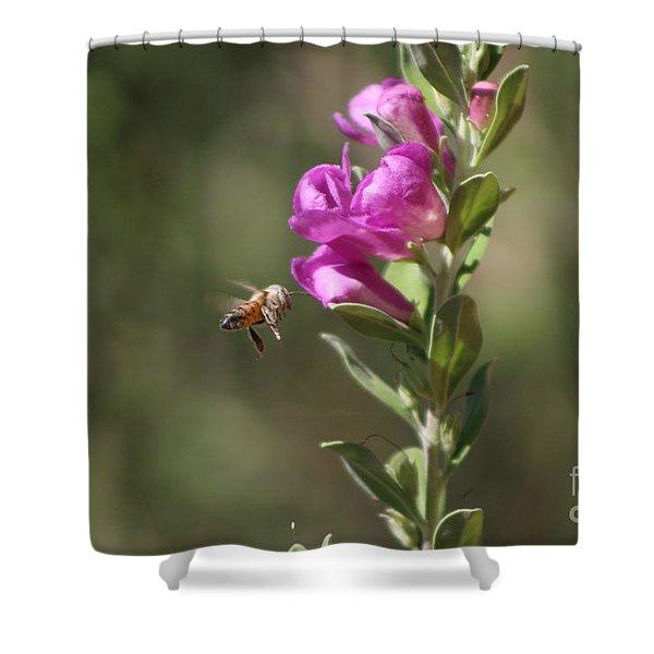 Bee Flying Towards Ultra Violet Texas Ranger Flower Shower Curtain