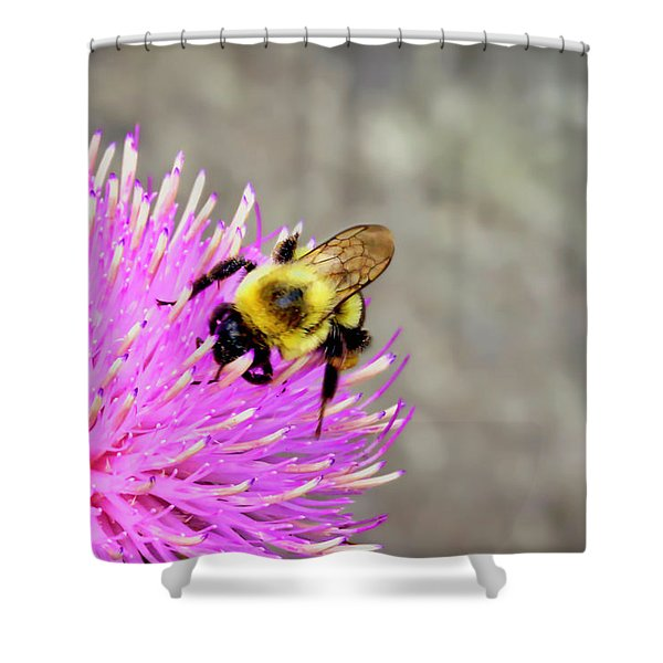 Bee On Pink Bull Thistle Shower Curtain