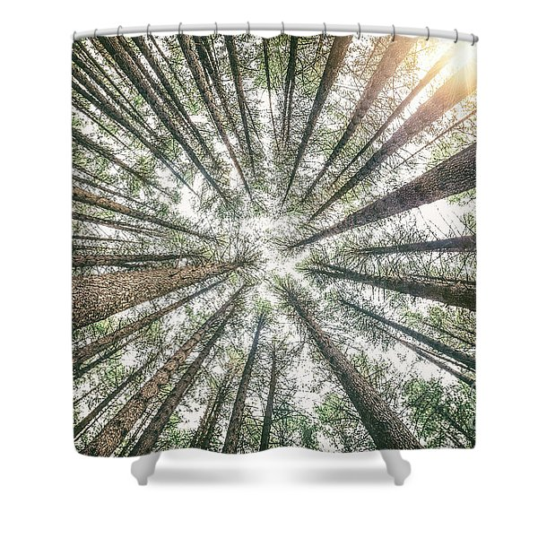 Below The Treetops Shower Curtain