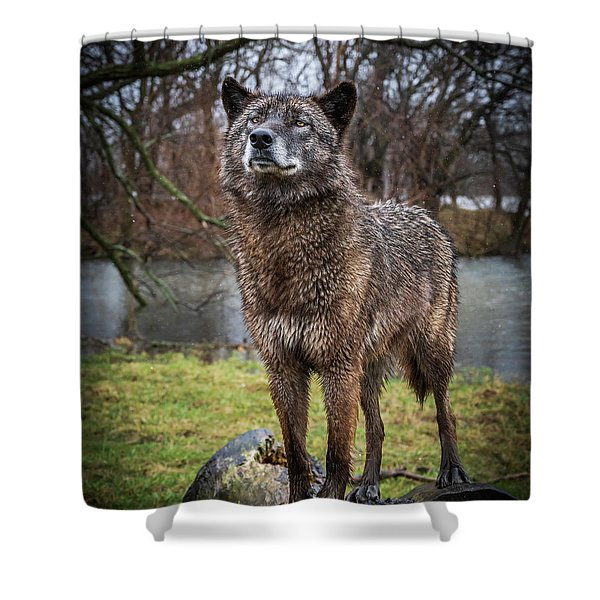Best Of Show Pose Shower Curtain