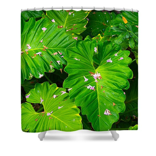 Shower Curtain featuring the photograph Big Green Leaves by Tom Gresham