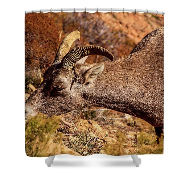 Shower Curtain featuring the photograph Big Horn Sheep 2, Zion by Dawn Richards