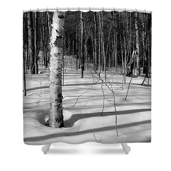 Shower Curtain featuring the photograph Birch Shadow. by Jeff Sinon