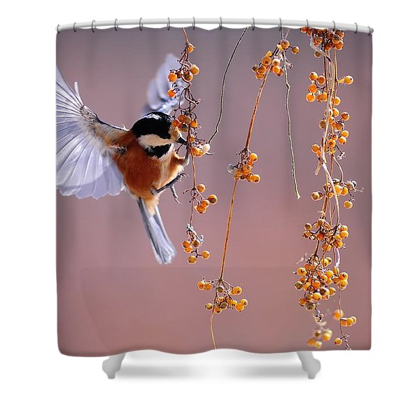 Bird Eating On The Fly Shower Curtain