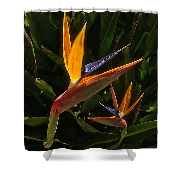 Shower Curtain featuring the photograph Bird Of Paradise by Meta Gatschenberger