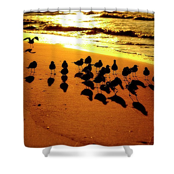 Shower Curtain featuring the photograph Bird Shadows by Tom Gresham
