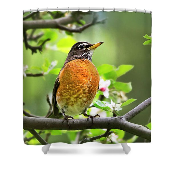 Birds - American Robin - Nature's Alarm Clock Shower Curtain
