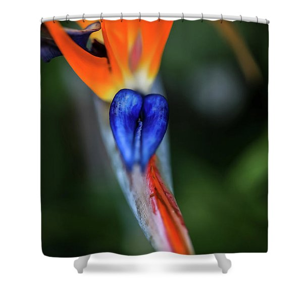 Birds Of Paradise Up Close Shower Curtain