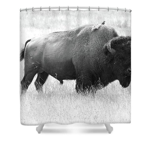 Bison - Monochrome Shower Curtain