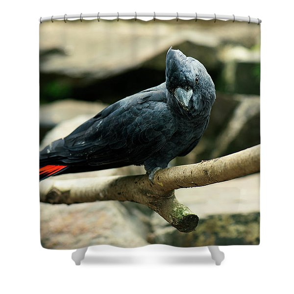 Black And Red Cockatoo. Shower Curtain