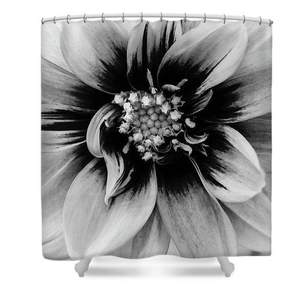 Black And White Dahlia Shower Curtain