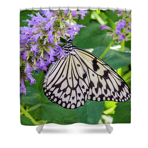 Black And White On Purple Shower Curtain