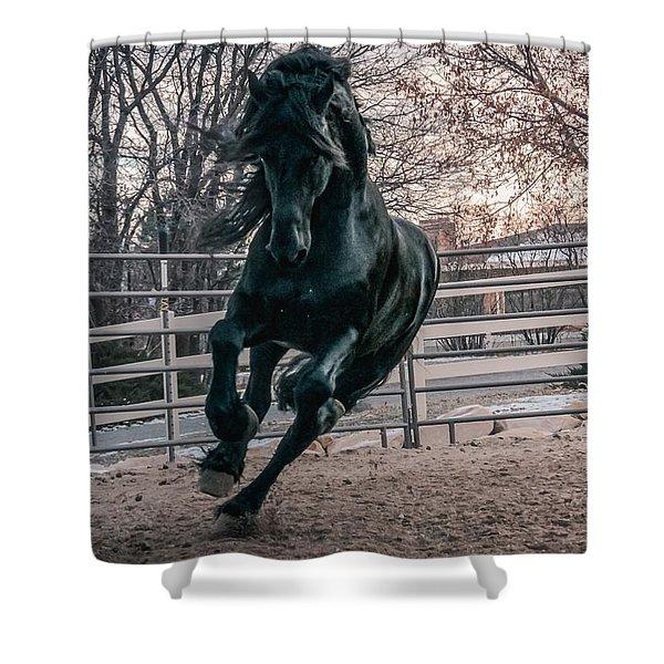 Black Stallion Cantering Shower Curtain