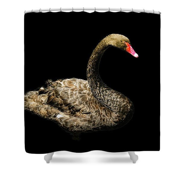 Black Swan On Black  Shower Curtain