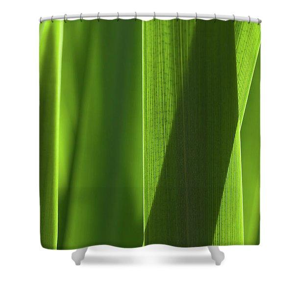 Blades 8851 Shower Curtain