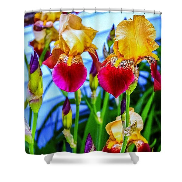 Blatant Iris Shower Curtain