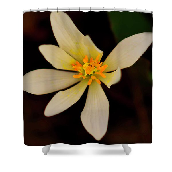 Shower Curtain featuring the photograph Bloodroot by Meta Gatschenberger
