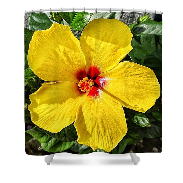 Bloom And Shine Shower Curtain