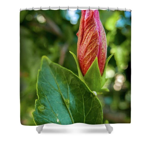 Blooming Hibiscus Shower Curtain