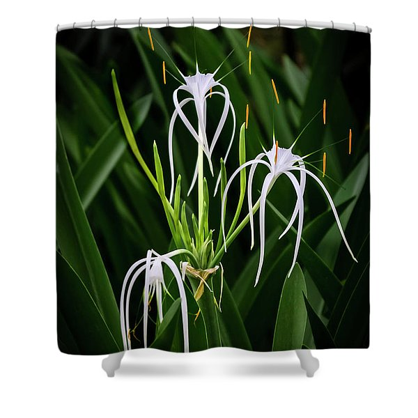 Blooming Poetry 4 Shower Curtain