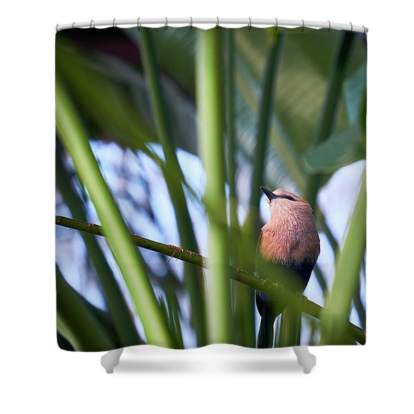 Shower Curtain featuring the photograph Blue-bellied Roller by Whitney Goodey