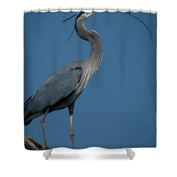 Blue Heron 2011-0322 Shower Curtain