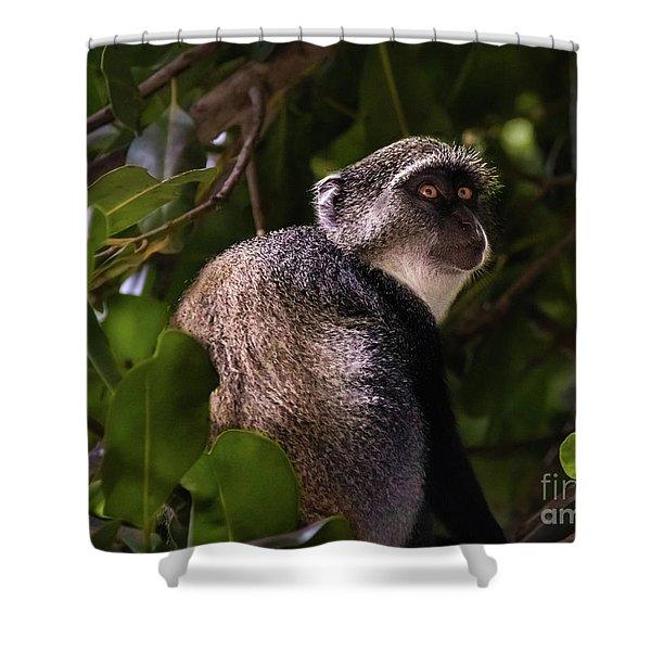 Blue Monkey, Zanzibar Shower Curtain