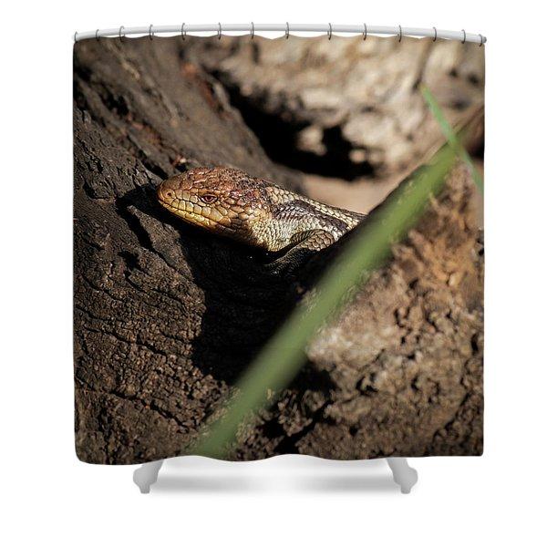 Blue Tongue Lizard Shower Curtain