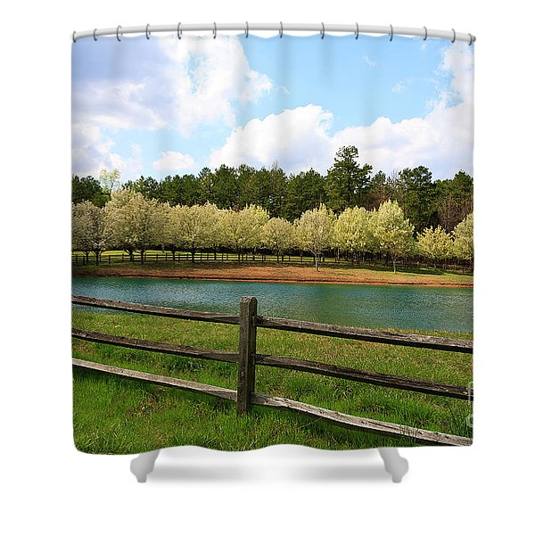 Bradford Pear Trees Blooming Shower Curtain