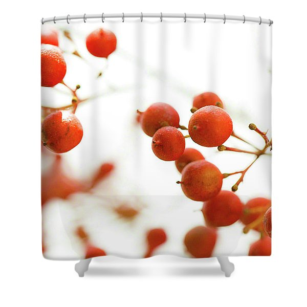 Brazilian Pepper 0493 Shower Curtain