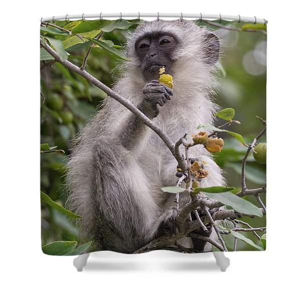 Breakfasting Monkey Shower Curtain