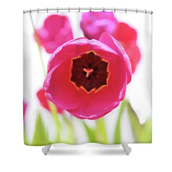 Shower Curtain featuring the photograph Bright Beginnings by Emily Johnson