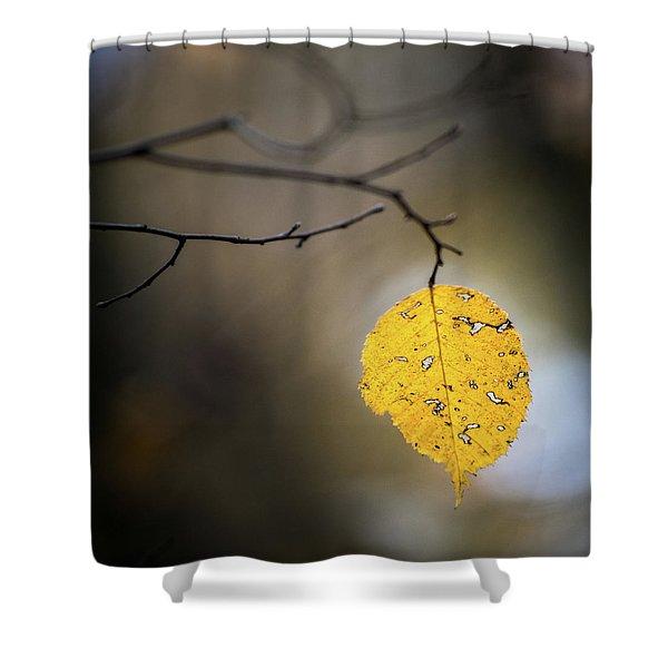 Bright Fall Leaf 7 Shower Curtain