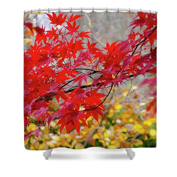 Brilliant Fall Color Shower Curtain