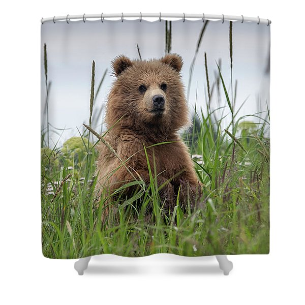 Brown Bear Cub In A Meadow Shower Curtain
