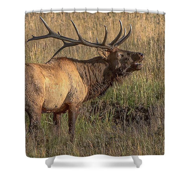 Bugling Bull Elk 7777 Shower Curtain