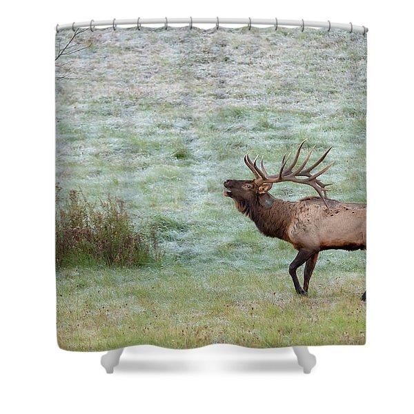 Bugling Bull Shower Curtain