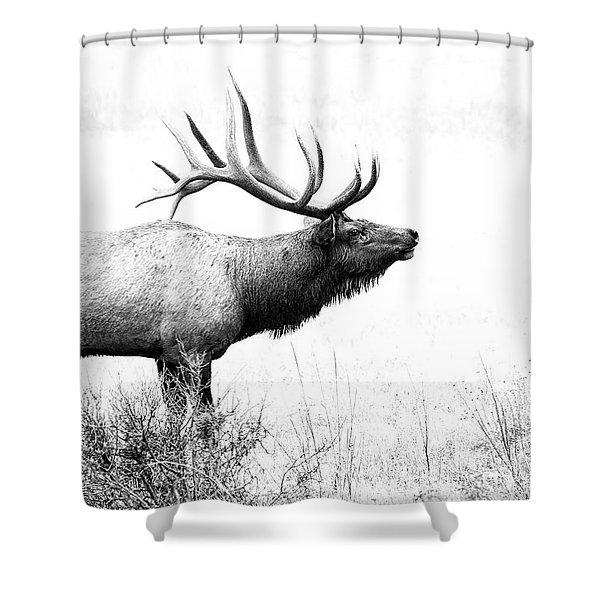 Bull Elk In Rut Shower Curtain