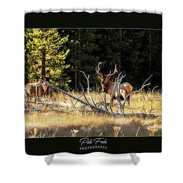 Bull Elk Shower Curtain