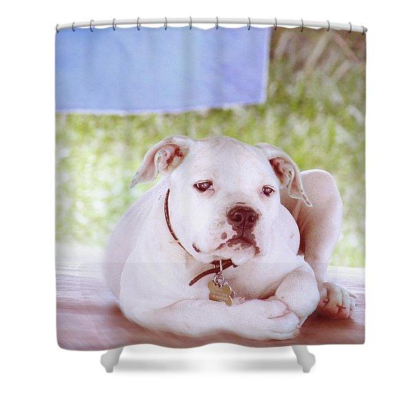 Bulldog Rana Art 80 Shower Curtain