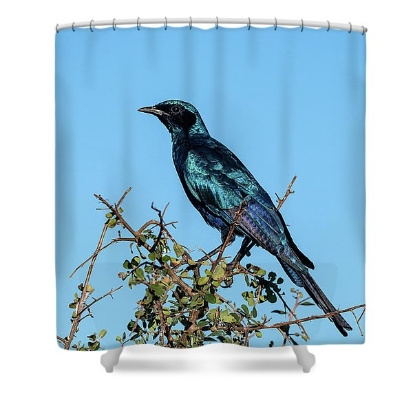 Burchell's Starling Shower Curtain