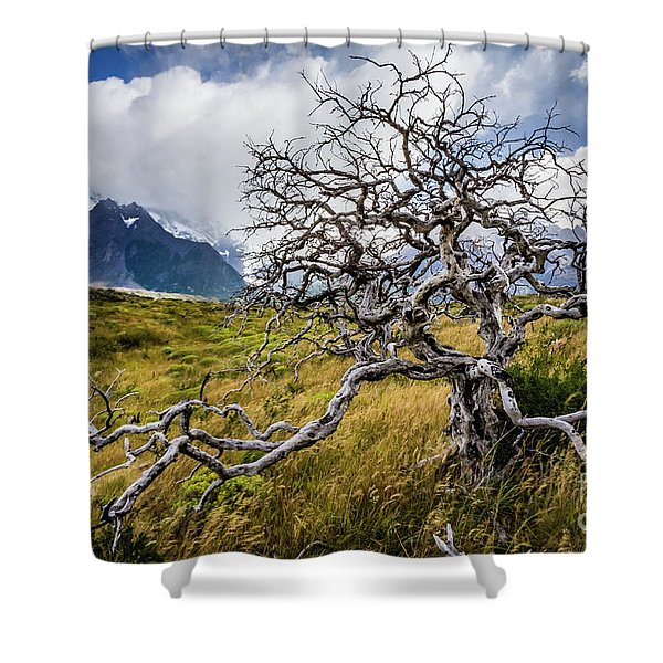 Burnt Tree, Torres Del Paine, Chile Shower Curtain