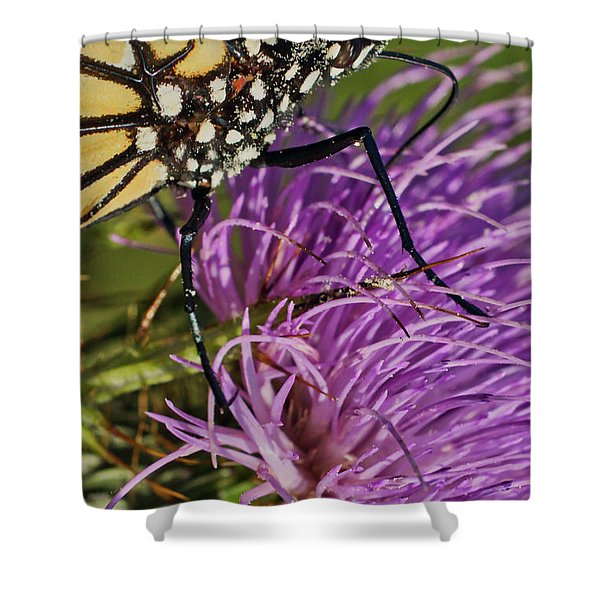 Butterfly Closeup Vertical Shower Curtain