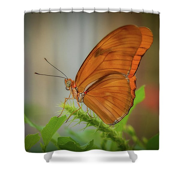 Butterfly, Delicate Wings... Shower Curtain