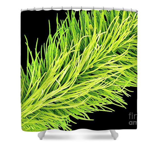 C016/0065 Shower Curtain