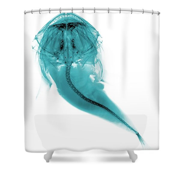 C022/5897 Shower Curtain