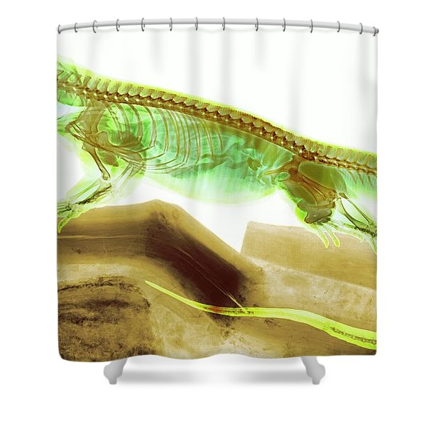 C025/8506 Shower Curtain