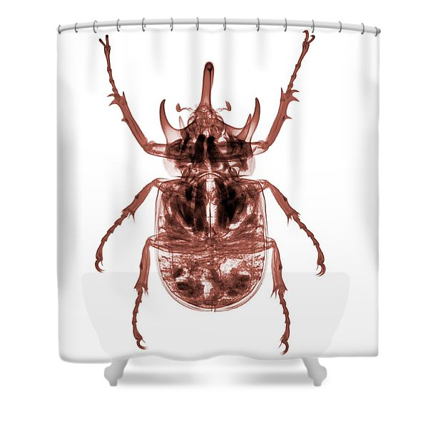 C025/8522 Shower Curtain